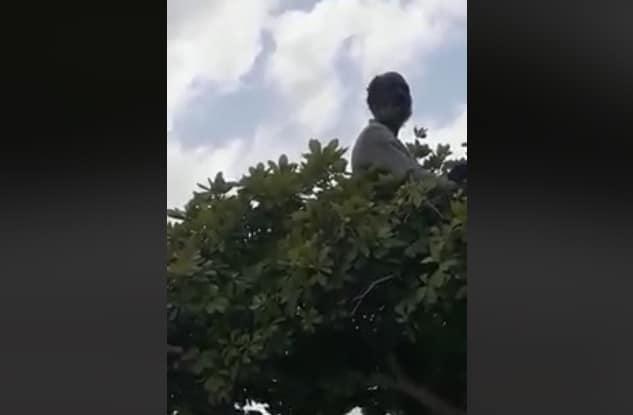 Surinaamse dakloze man in boom, waterkant, suriname1